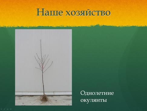 sulek_pitomnik_pr_12_1.jpg