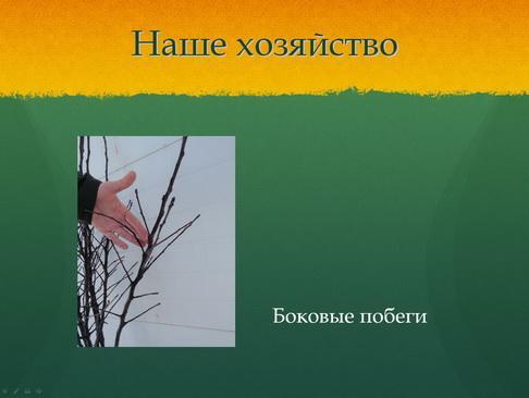 sulek_pitomnik_pr_13_1.jpg