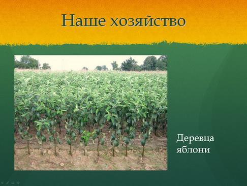 sulek_pitomnik_pr_14_1.jpg
