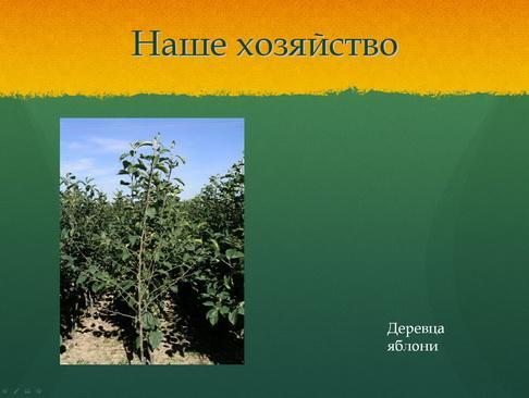 sulek_pitomnik_pr_15_1.jpg