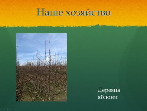 sulek_pitomnik_pr_16_1.jpg