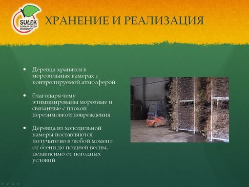 sulek_pitomnik_pr_18_1.jpg