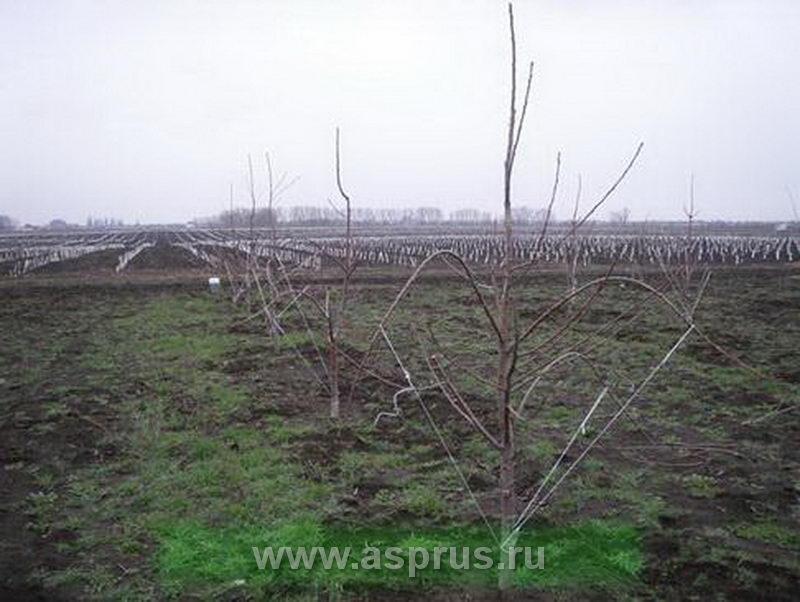 chereschnya_14_1.jpg