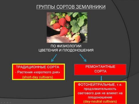 hortplant_pr_2_02_1.jpg