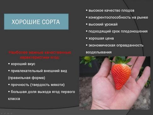 hortplant_pr_2_05_1.jpg
