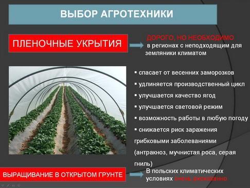 hortplant_pr_2_06_1.jpg