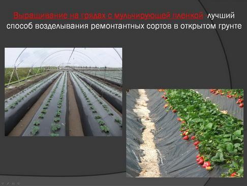 hortplant_pr_2_07_1.jpg