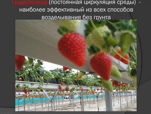 hortplant_pr_2_09_1.jpg