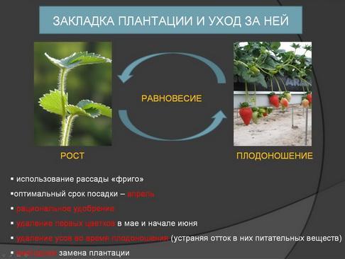 hortplant_pr_2_12_1.jpg