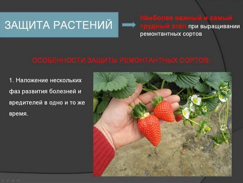 hortplant_pr_2_13_1.jpg