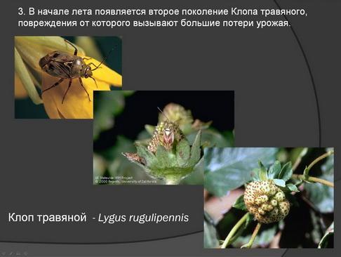hortplant_pr_2_15_1.jpg