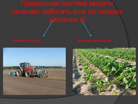 hortplant_pr_2_16_1.jpg