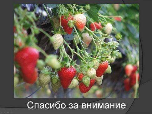 hortplant_pr_2_19_1.jpg
