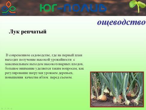 korolev_pr_31_1