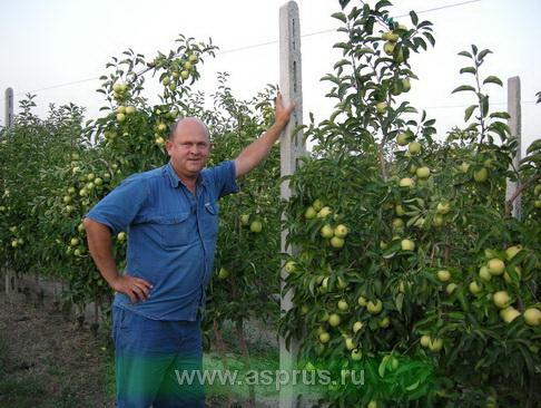 Муханин Игорь Викторович в плодоносящем интенсивном саду