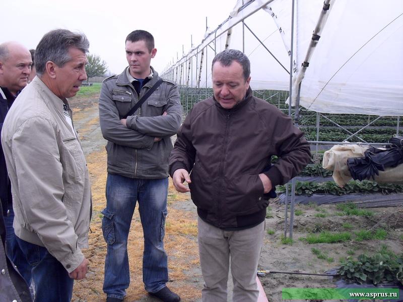 А. Маццони  раскрывает секреты технологии выращивания земляники садовой в зимних  теплицах