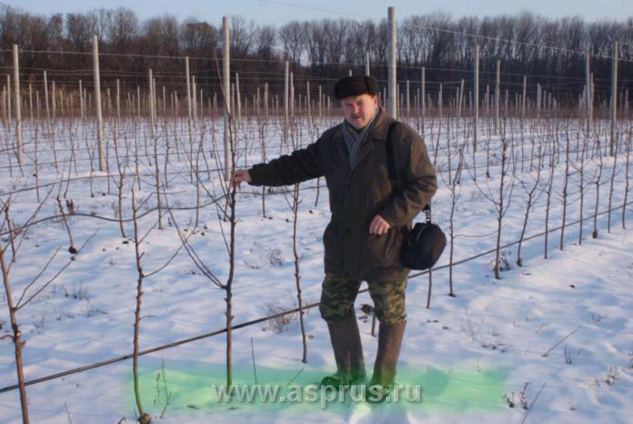 Рябушкин Юрий Борисович, доктор сельскохозяйственных наук (Саратовский ГАУ)