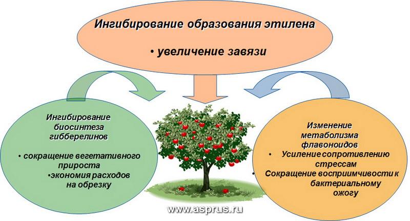 РЕГАЛИС физиологическое действие на растение