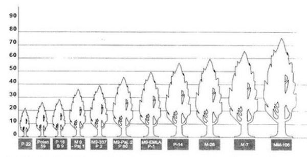 Таблица 1 – Классификация