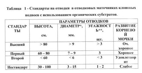 Таблица 1 - Продук. интенсив. маточника клон.подв.