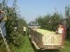 Уборка плодов в контейнеровоз в Ровенских садах