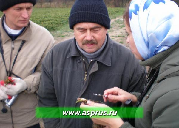 Занятия в полевых условиях по определению физиологической готовности рассады  к выкопке