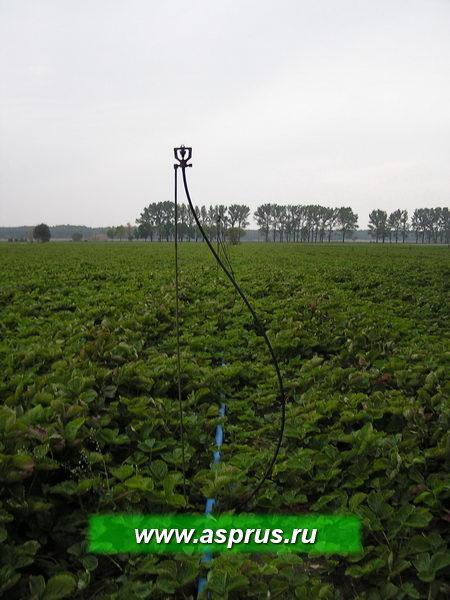 Установка распылителей на маточнике земляники