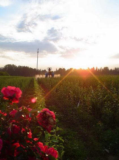 Для странички Статьи о садоводстве