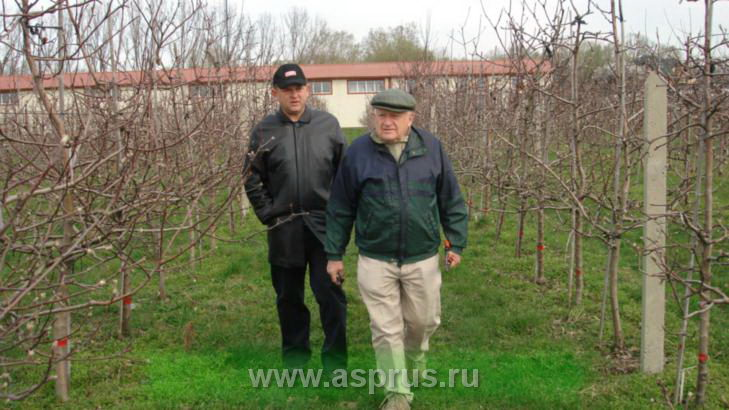 Председатель АСП-РУС Муханин И.В. и профессор Варшавской академии Анджей Садовский в интенсивном саду яблони.
