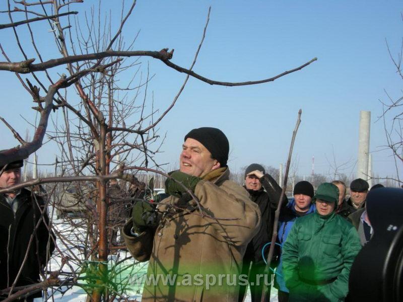 Аш Райкаэрт (Голландия) показывает приемы обрезки плодовых деревьев.