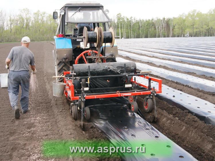 Гребнеобразователь В-9 с пленкоукладчиком в работе – для плотности посадки 44 тыс. растений на гектаре