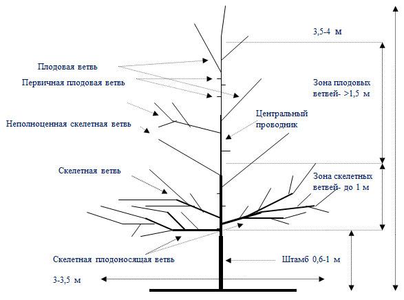 Схема Улучшенное русское веретено