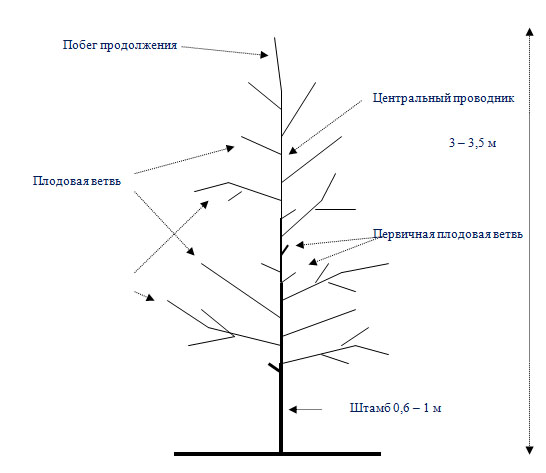 Схема Модифицированное веретено