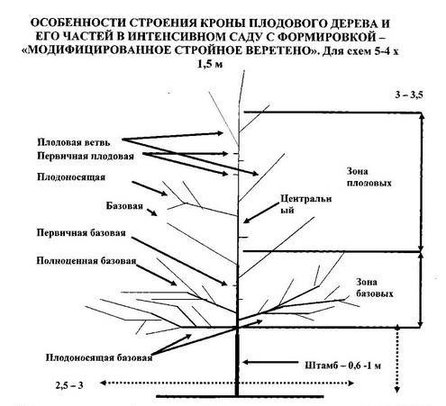 Схема Модифицированное стройное веретено