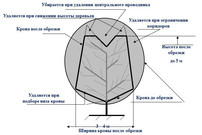 Принципиальная схема «ШОКОВОЙ»